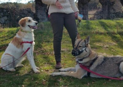 curso- fin-de-semana-educacion-canina-basica
