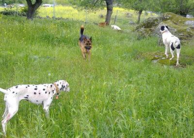 paseo_perro_escuela_la_tejera