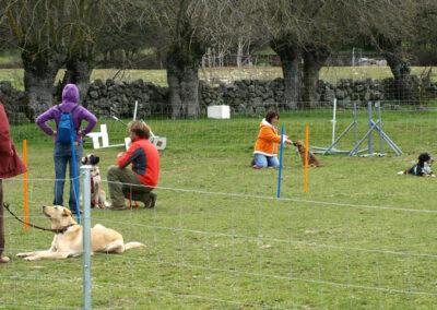 campo_entrenamiento_escuela_canina_la_tejera