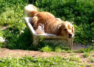 perro-curso-adiestramiento-avanzado-galapagar