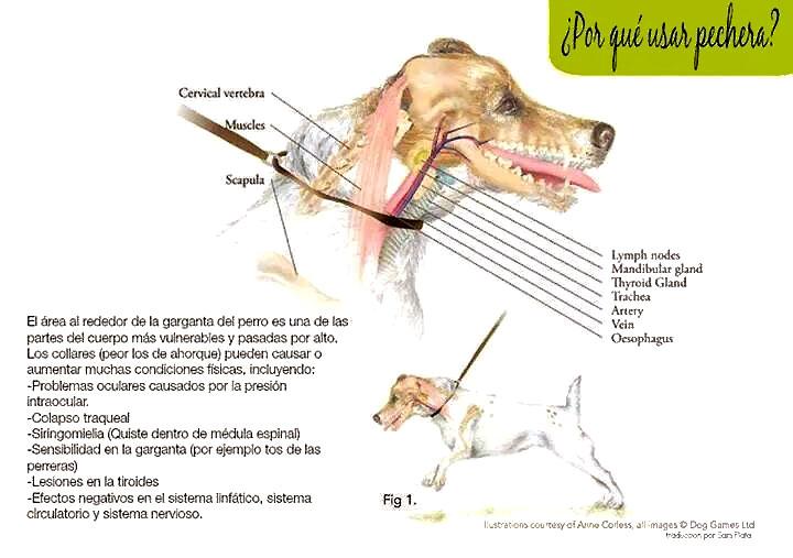 ¿Realmente son necesarios los collares de ahorque y pinchos para educar a nuestros perros?