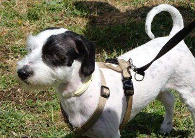 graduación clases intensivas de obediencia canina en Febrero 2017 madrid