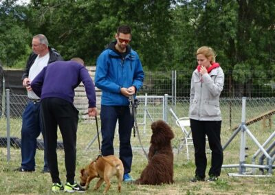 curso intensivo fin de semana de obediencia canina basicaen galapagar