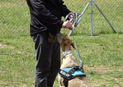 clases de obediencia canina de Febrero 2017 galapagar