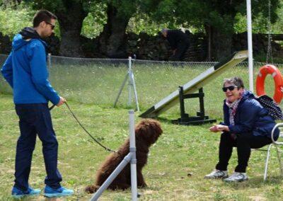 diplomados en curso intensivo fin de semana de obediencia canina basica
