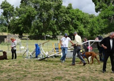 CURSO DE adiestramiento canino de Febrero 2017 galapagar