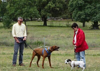 diplomados en curso intensivo fin de semana de obediencia canina basica en galapagar
