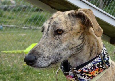 CURSO DE OBECIENCIA canina de Febrero 2017