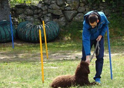 curso intensivo fin de semana de obediencia canina basica