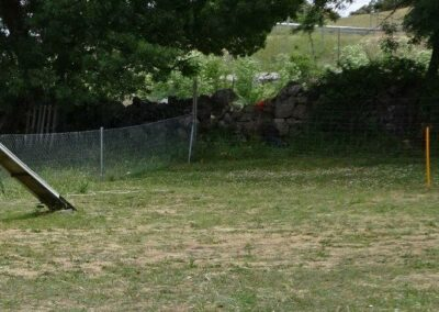 curso intensivo fin de semana de obediencia canina basica en madrid