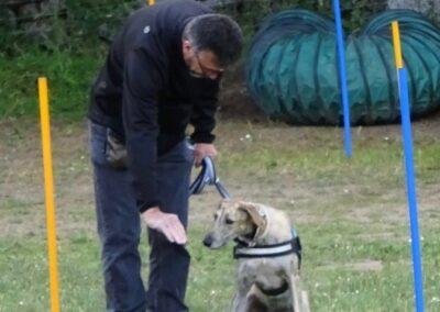 clases de obediencia canina de Febrero 2017 madrid