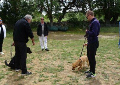 clases intensivas fin de semana de educacion canina en madrid