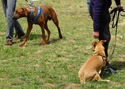 diplomados en curso intensivo fin de semana de obediencia canina basica en madrid