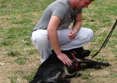 clases intensivas de educación canina básica de Febrero 2017 galapagar