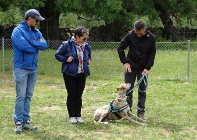 clases intensivas de educacion canina en Febrero 2017 en galapagar