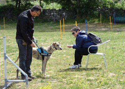 CURSO DE adiestramiento canino de Febrero 2017 madrid