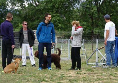 clases intensivas fin de semana de educacion canina