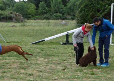 clases intensivas de educacion canina en Febrero 2017 en madrid