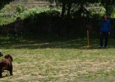 Perro en el curso de adiestramiento de La Tejera en Madrid