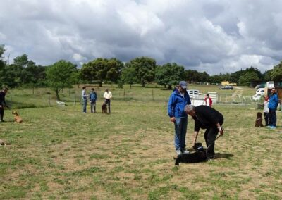 clases de educación canina de Febrero 2017 galapagar
