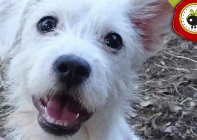 Asia de Alicia Moreno, graduado curso de obediencia básica canina intensivo en Escuela Canina La Tejera
