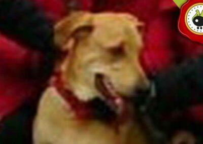 Axel, graduado curso de obediencia canina básica  en Escuela Canina La Tejera