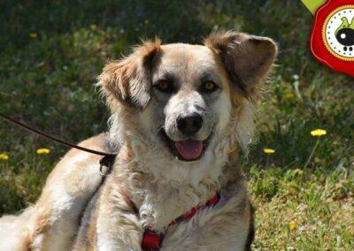 Berta, graduado curso de obediencia canina básica  en Escuela Canina La Tejera