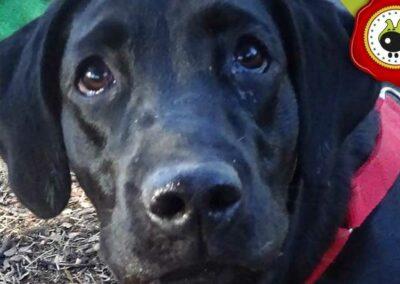Chia de Ana Laura Ruiz, graduado curso de obediencia básica canina intensivo en Escuela Canina La Tejera