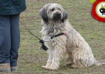 Coby, graduado curso de obediencia canina básica  en Escuela Canina La Tejera