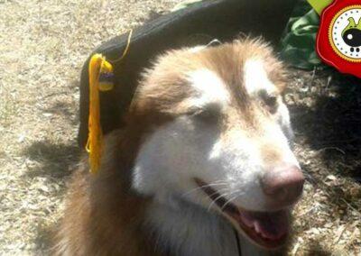 Diciembre, graduado curso de obediencia canina básica  en Escuela Canina La Tejera