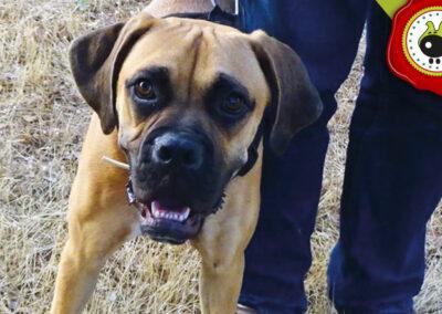 KYRA graduado curso de obediencia básica canina intensivo en Escuela Canina La Tejera