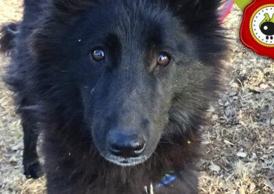 LEIA graduado curso de obediencia básica canina intensivo en Escuela Canina La Tejera