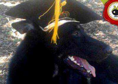 Lucky, graduado curso de obediencia canina básica  en Escuela Canina La Tejera