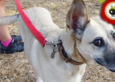 MAYA graduado curso de obediencia básica canina intensivo en Escuela Canina La Tejera