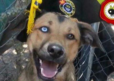 Odei, graduado curso de obediencia canina básica  en Escuela Canina La Tejera