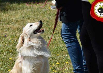 Pinocho, graduado curso de obediencia canina básica  en Escuela Canina La Tejera