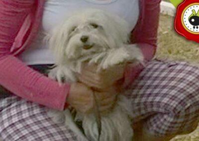 Pipa, graduado curso de obediencia canina básica  en Escuela Canina La Tejera