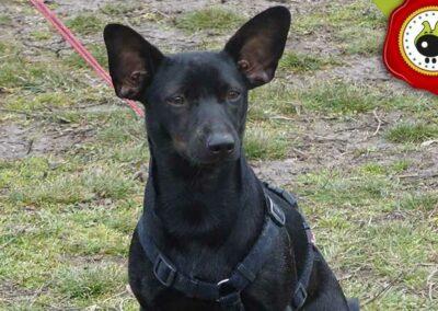 Rita, graduado curso de obediencia canina básica  en Escuela Canina La Tejera