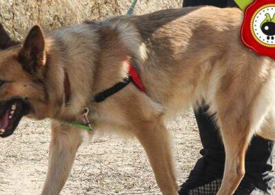 Yira, graduado curso de obediencia canina básica  en Escuela Canina La Tejera