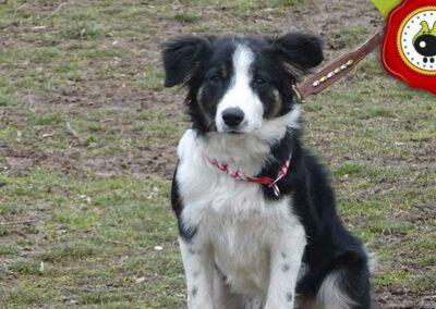 Zuri, graduado curso de obediencia canina básica  en Escuela Canina La Tejera