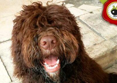 Argos, graduado curso de obediencia básica canina intensivo en Escuela Canina La Tejera