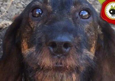 Aslan, graduado curso de obediencia canina básica  en Escuela Canina La Tejera