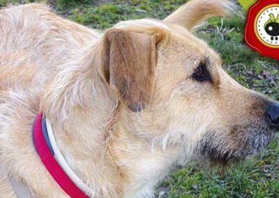 Bella, graduado curso de obediencia canina básica  en Escuela Canina La Tejera