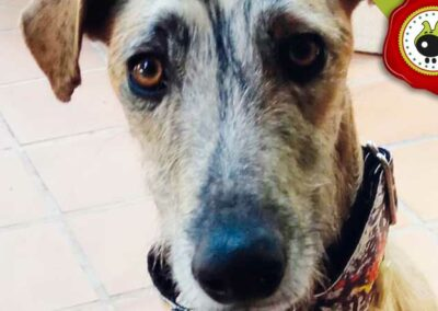 Buddy, graduado curso de obediencia básica canina intensivo en Escuela Canina La Tejera
