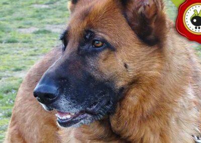 Circa, graduado curso de obediencia canina básica  en Escuela Canina La Tejera