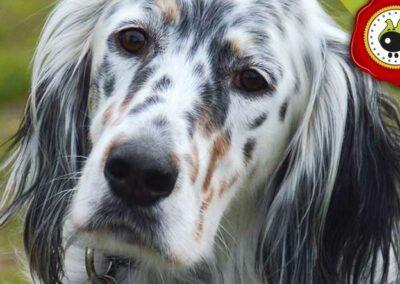 Gary, graduado curso de obediencia canina básica  en Escuela Canina La Tejera
