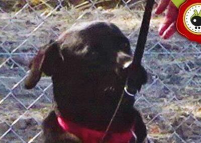 Goyo, graduado curso de obediencia canina básica  en Escuela Canina La Tejera