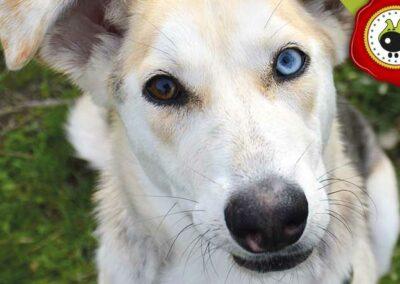 Lola, graduado curso de obediencia canina básica  en Escuela Canina La Tejera