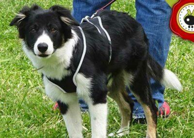 Max, graduado curso de obediencia canina básica  en Escuela Canina La Tejera