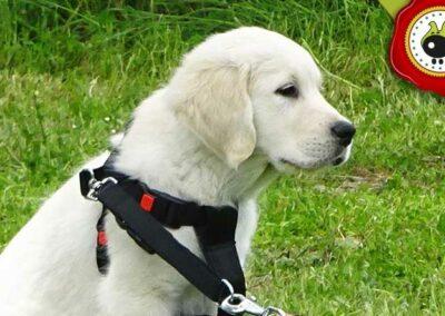 Ness, graduado curso de obediencia canina básica  en Escuela Canina La Tejera